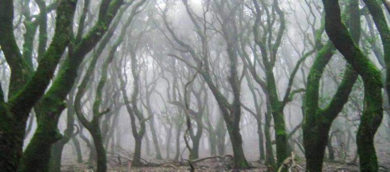 """Χριστιάνα Καλογήρου: «Προστατεύουμε και αναβαθμίζουμε το """"Δάσος Ράντη"""" στην Ικαρία»"""