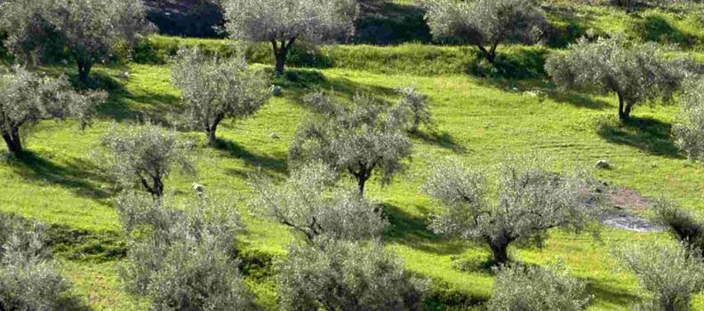 Δημιουργία ιστοχώρου για τους αγρότες του Βορείου Αιγαίου